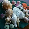 三浦海岸🐚観光時の楽しみ方🐚