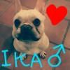 三浦海岸🐟ペットのパラダイス🌺カウウェラ🌺愛犬ちゃんOK🎵