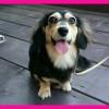 本日ご来店のワンちゃん🐶ペットOK🐶愛犬と一緒に❤三浦海岸