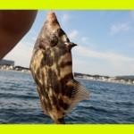 冬季期間中のkauwela(*´∀`*)ノ🍂❄三浦海岸❤おすすめ❤冬遊び❤🐟釣り🐟貸しボート始めます❗❗🎵