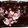 三浦海岸🌸おすすめ🌸桜祭り🌸2018🌸夜桜🌸菜の花🌸ジェットスキー🌸ツーリング🌸